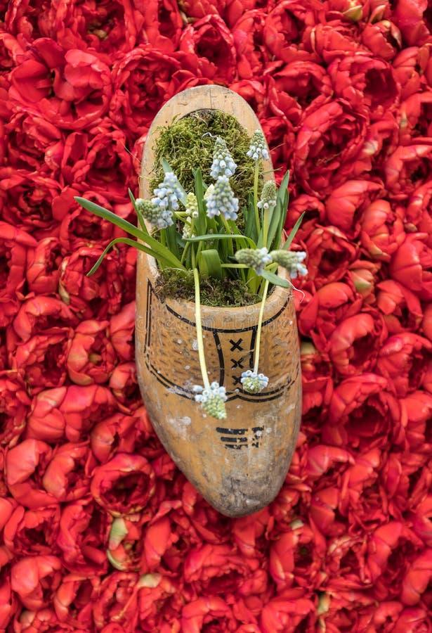 Παραδοσιακό ολλανδικό Clog σε ένα υπόβαθρο των κόκκινων τουλιπών στοκ φωτογραφίες