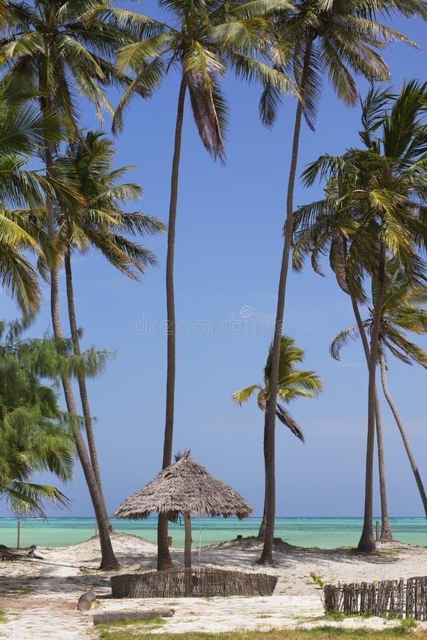Παραθαλάσσιο θέρετρο με τους φοίνικες, νησί Zanzibar, Τανζανία στοκ εικόνα
