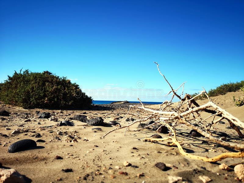 Παραλία καναρινιών στοκ εικόνες