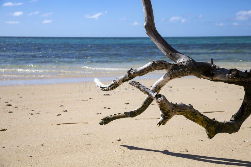 Παραλία κλάδων στοκ φωτογραφία με δικαίωμα ελεύθερης χρήσης