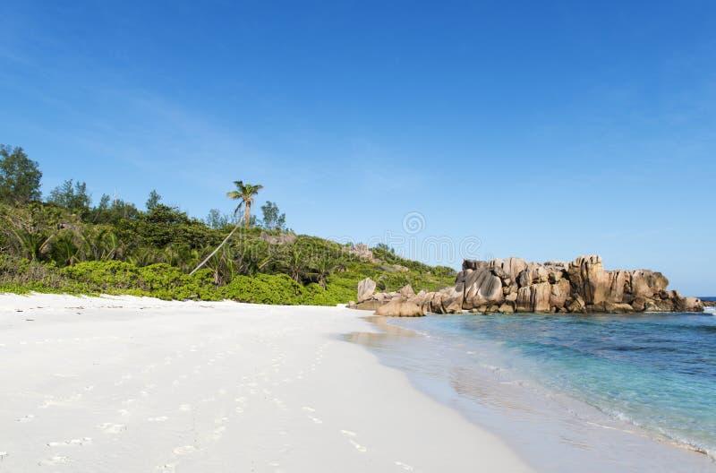 Παραλία κοκοφοινίκων στις Σεϋχέλλες στοκ εικόνα