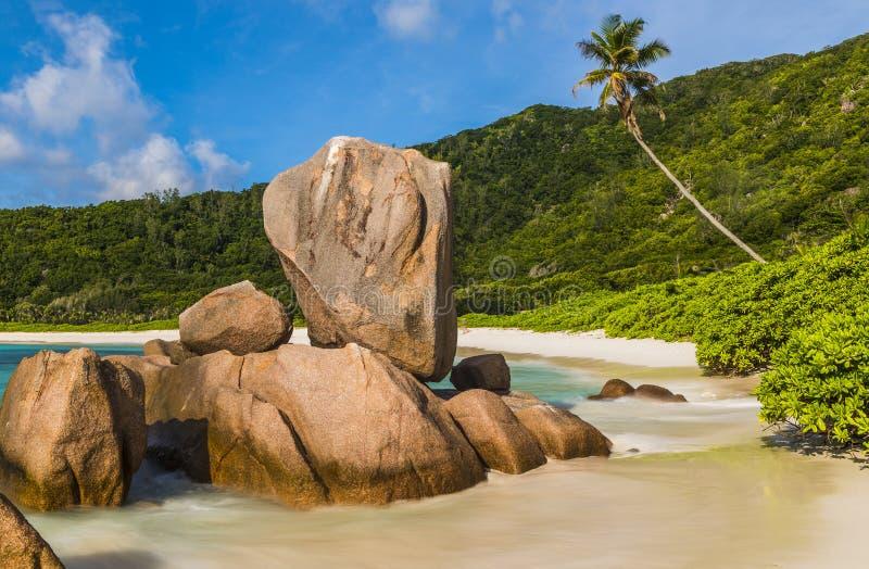 Παραλία κοκοφοινίκων Anse στις Σεϋχέλλες στοκ εικόνες