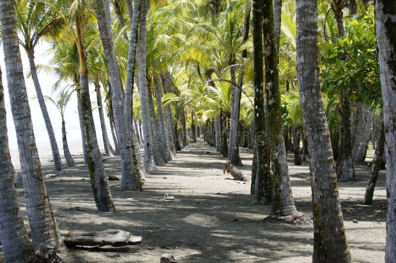 Παραλία κυριακό Puntarenas Κόστα Ρίκα στοκ εικόνα με δικαίωμα ελεύθερης χρήσης