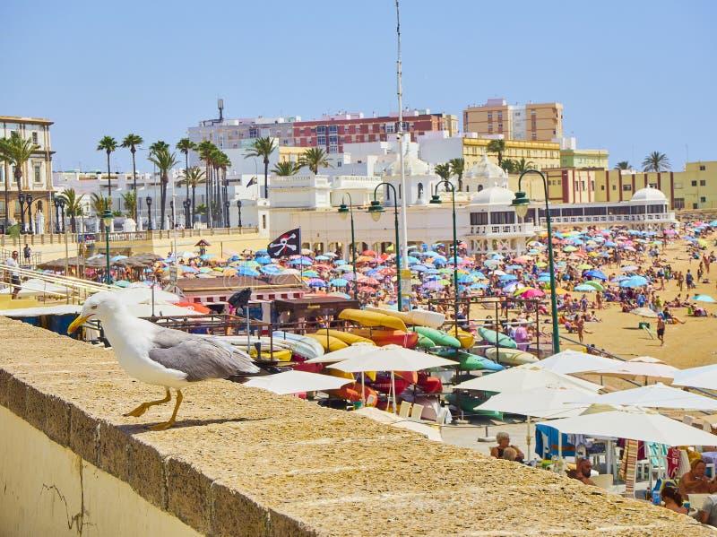 Παραλία Λα Caleta Άποψη από Duque de Najera Avenue Καντίζ Ανδαλουσία, Ισπανία στοκ εικόνα με δικαίωμα ελεύθερης χρήσης