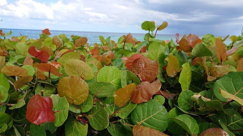 παραλία Μαϊάμι στοκ εικόνα με δικαίωμα ελεύθερης χρήσης