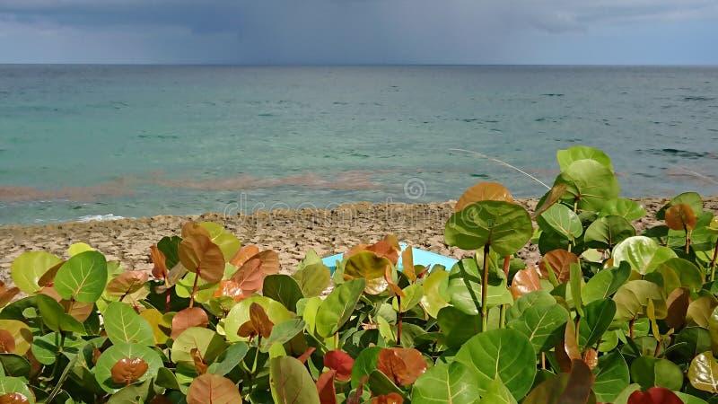παραλία Μαϊάμι στοκ φωτογραφίες
