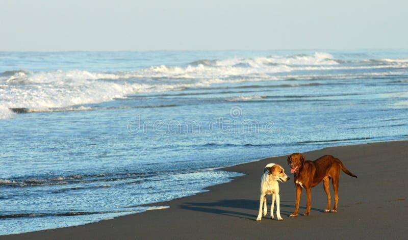 Download παραλία Μεξικό στοκ εικόνες. εικόνα από κύματα, bazaars - 2227440
