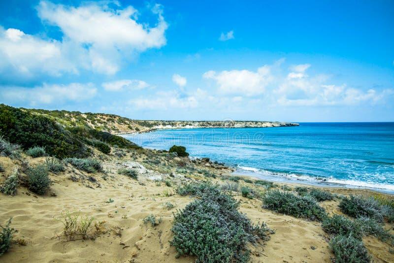 Παραλία με την άγρια φύση, τις χλόες αμμόλοφων άμμου και τη θάλασσα στοκ εικόνες με δικαίωμα ελεύθερης χρήσης