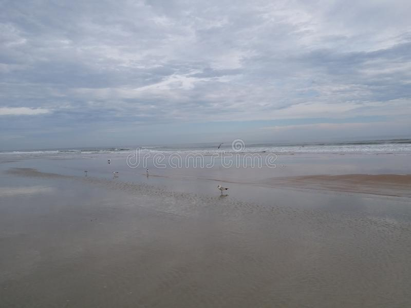 Παραλία με seagulls που κάθονται στην ακτή στοκ φωτογραφίες με δικαίωμα ελεύθερης χρήσης