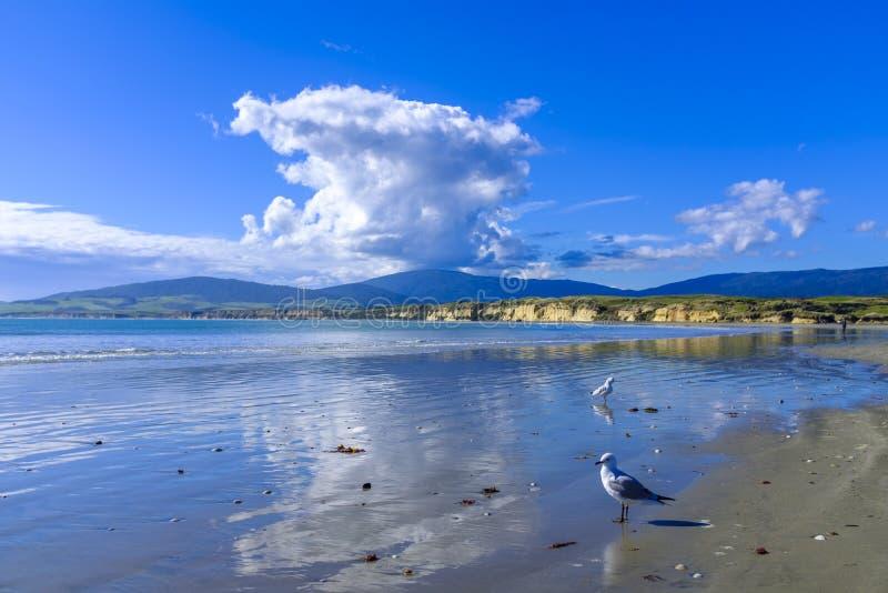 Παραλία νησιών πιθήκων στη Νέα Ζηλανδία στοκ εικόνα με δικαίωμα ελεύθερης χρήσης