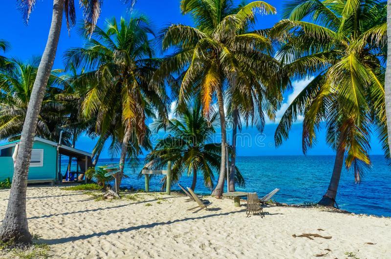 Παραλία παραδείσου στο σταθμό τομέων κοραλλιογενών νήσων τόξων της Carrie νησιών caye, καραϊβική θάλασσα, Μπελίζ Τροπικός προορισ στοκ εικόνες