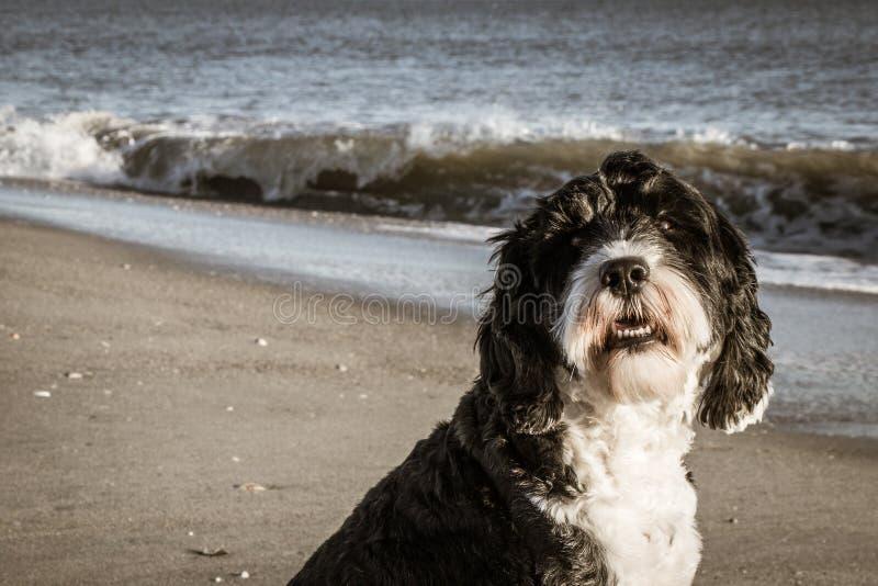 Παραλία σκυλιών για μια στον ωκεανό στοκ φωτογραφίες