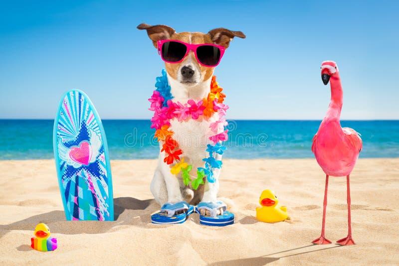 Παραλία σκυλιών Surfer στοκ φωτογραφία