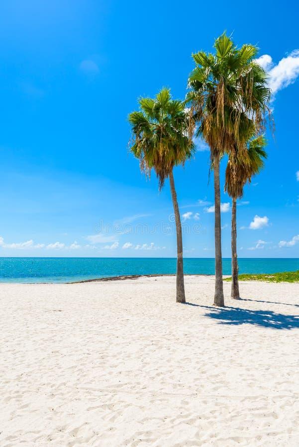 Παραλία σομπρέρο με τους φοίνικες στους Florida Keys, μαραθώνιος, Φλώριδα, ΗΠΑ Τροπικός και προορισμός παραδείσου για τις διακοπέ στοκ φωτογραφίες