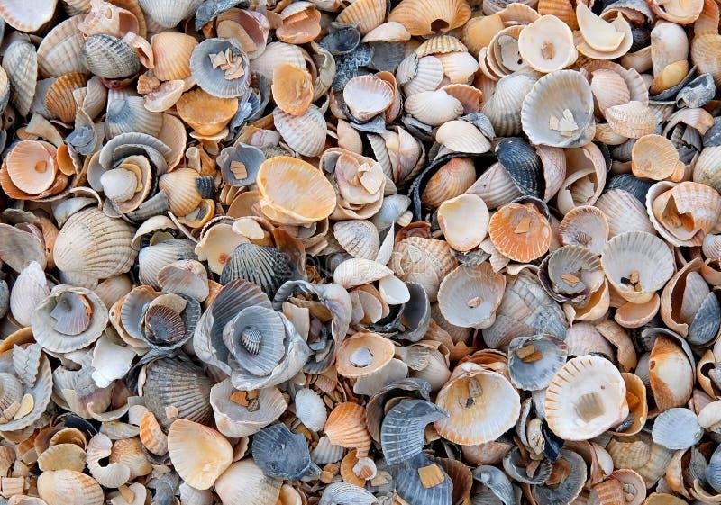 Παραλία της Shell στοκ εικόνα