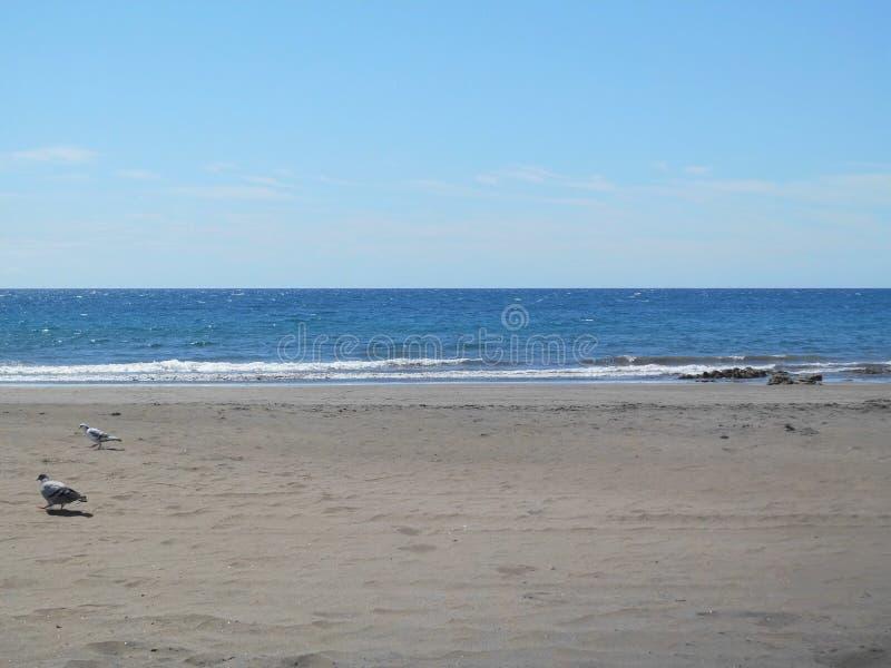 Παραλία του SAN AgustÃn/θλγραν θλθαναρηα στοκ εικόνες με δικαίωμα ελεύθερης χρήσης