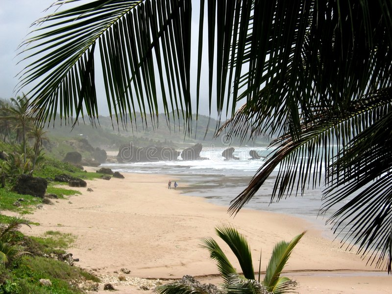 παραλία των Μπαρμπάντος στοκ φωτογραφίες με δικαίωμα ελεύθερης χρήσης
