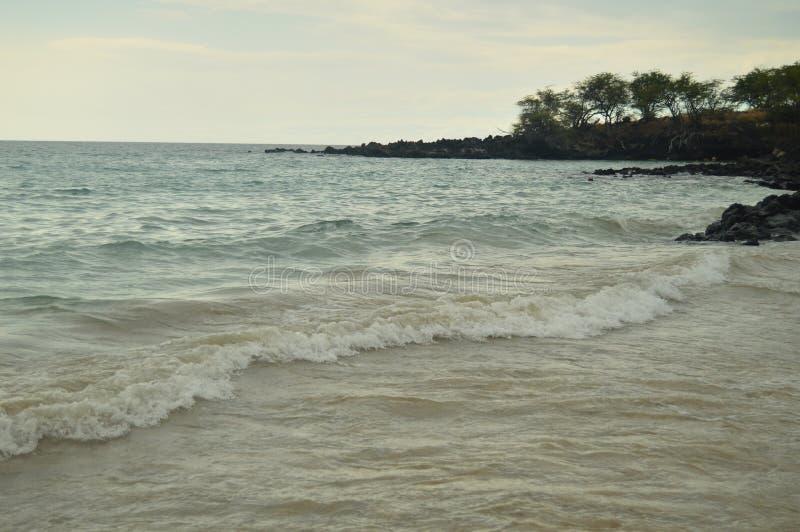 Παραλία & φοίνικες στη Χαβάη στοκ εικόνες