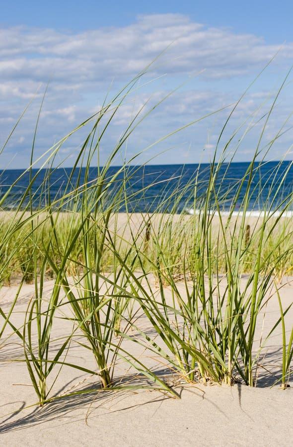 παραλία χλόης στοκ φωτογραφία