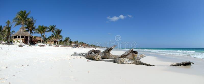 παραλία όμορφες Καραϊβικέ& στοκ φωτογραφία
