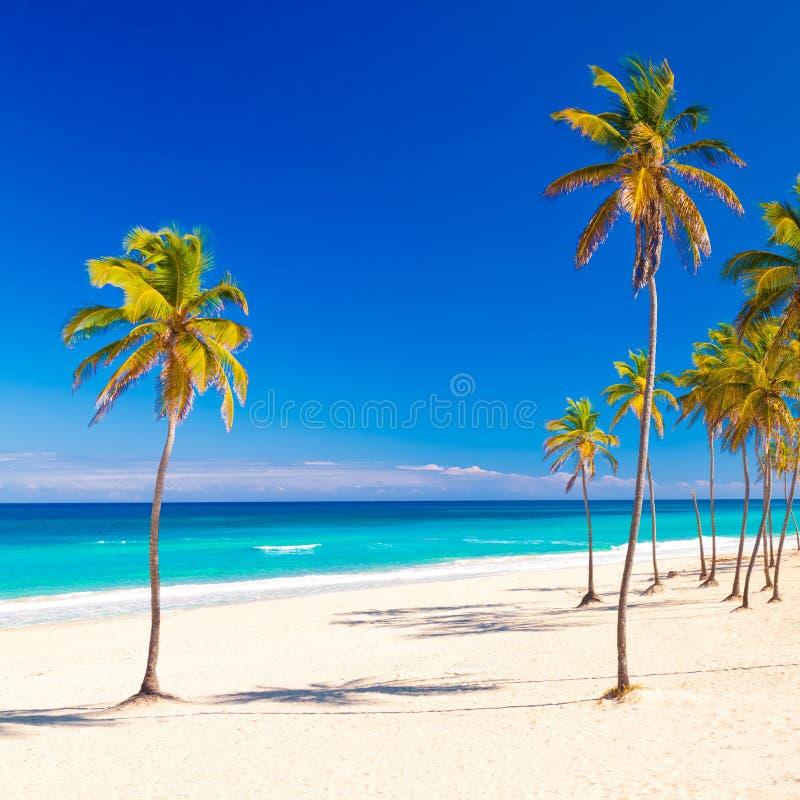παραλία όμορφο κουβανικό στοκ εικόνα με δικαίωμα ελεύθερης χρήσης