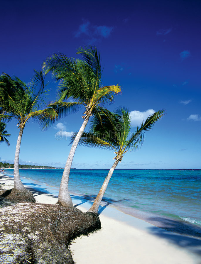 Download παραλία στοκ εικόνες. εικόνα από παράδεισος, ειρηνικός - 105022