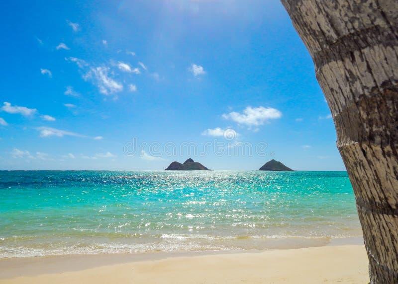 Παραλία Lanikai με το φλοιό φοινίκων καρύδων στοκ φωτογραφία με δικαίωμα ελεύθερης χρήσης