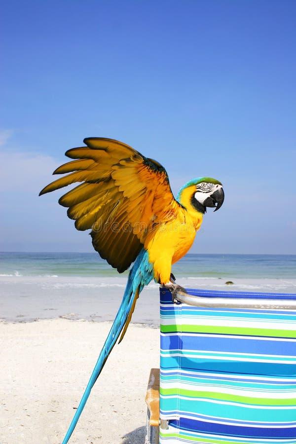παραλία macaw στοκ φωτογραφία