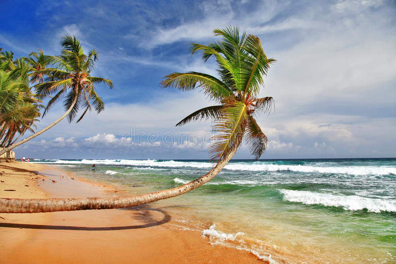 Παραλία Sri lanka στοκ φωτογραφία με δικαίωμα ελεύθερης χρήσης