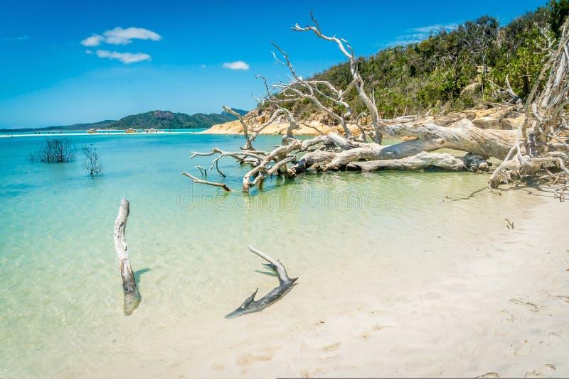Παραλία Whitehaven στο Whitsundays, κοντά στην παραλία Airlie στοκ εικόνες