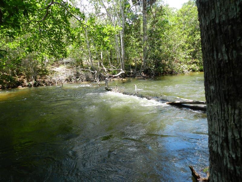 Παραπόταμος του ποταμού του Αμαζονίου στοκ εικόνα