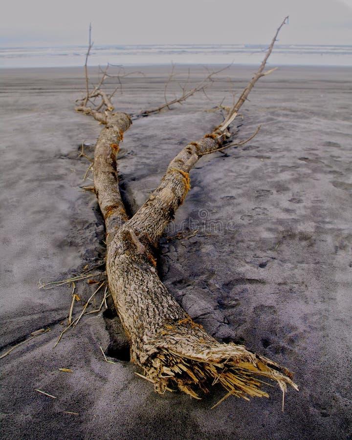 παρασυρμένο δέντρο στοκ εικόνες με δικαίωμα ελεύθερης χρήσης