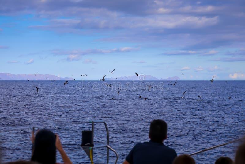 Παρατήρηση dolfins στη φύση στοκ εικόνα