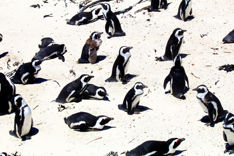 Παραλία λίθων στο Καίηπ Τάουν στοκ εικόνες με δικαίωμα ελεύθερης χρήσης