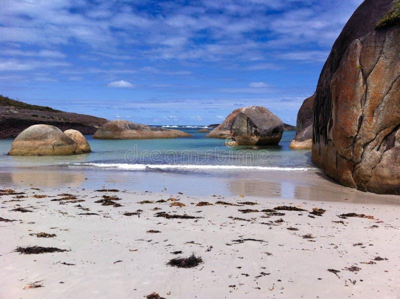 Παραλία ελεφάντων στοκ εικόνες με δικαίωμα ελεύθερης χρήσης
