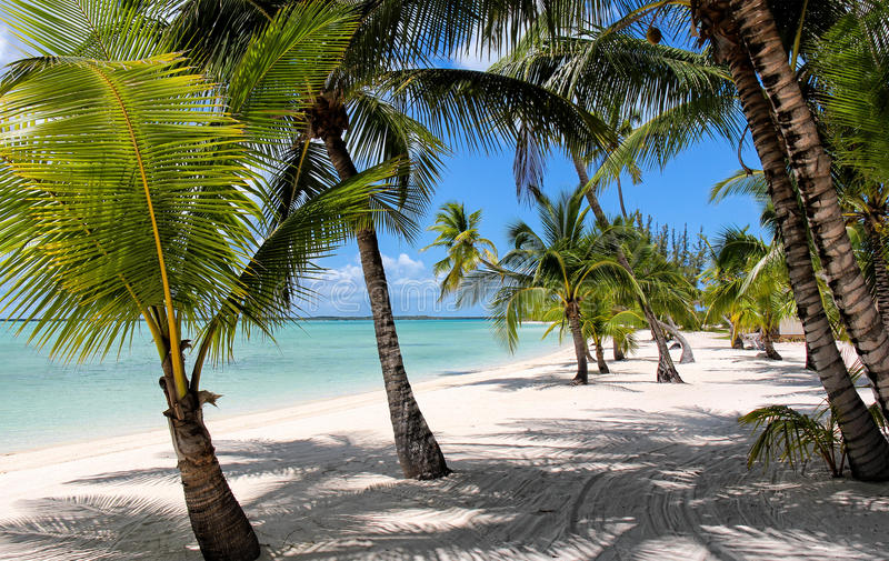 Παραλία με τους φοίνικες στις Μπαχάμες στοκ εικόνες με δικαίωμα ελεύθερης χρήσης
