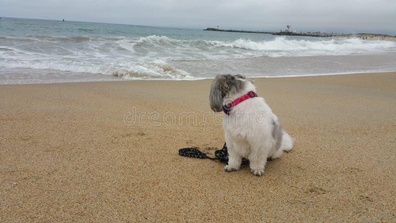 Παραλία με το σκυλί στοκ φωτογραφία με δικαίωμα ελεύθερης χρήσης