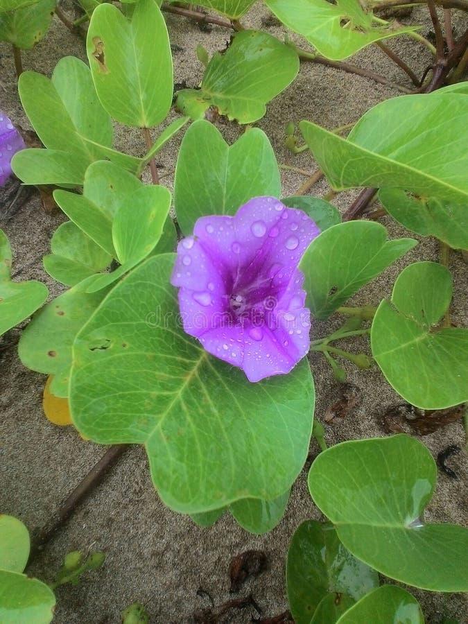 Παραλία λουλουδιών στοκ εικόνα με δικαίωμα ελεύθερης χρήσης