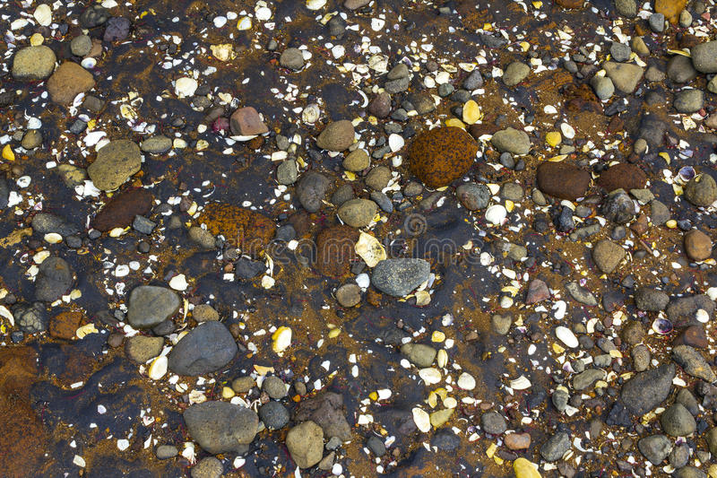 Παραλία Ώκλαντ Νέα Ζηλανδία Cornwallis χαλικιών και κοραλλιών στοκ εικόνες