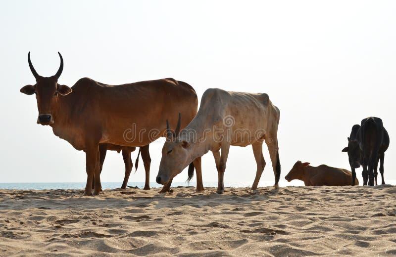 Παραλία Agonda του νότου Goa, Ινδία στοκ εικόνα