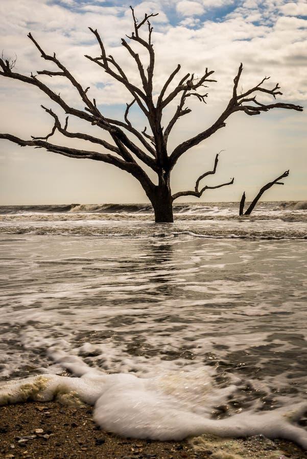 Παραλία Boneyard κόλπων βοτανικής στοκ εικόνα