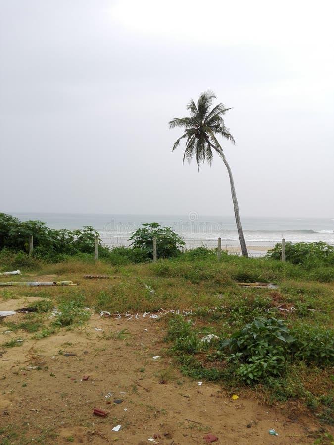 Παραλία Dikwella στοκ εικόνες