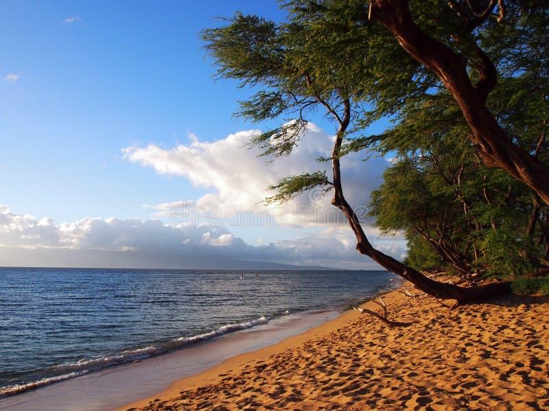 Παραλία Kaanapali στο σούρουπο με τα δέντρα και Lanai στην απόσταση στοκ εικόνα