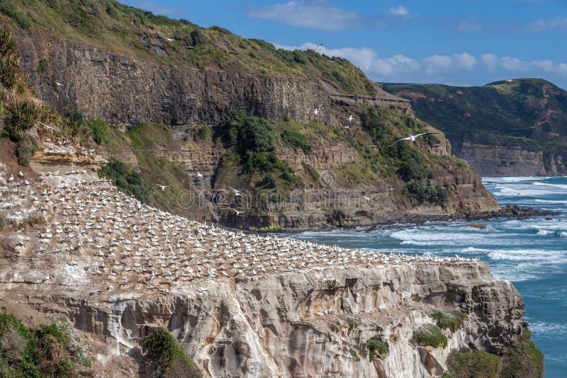 Παραλία Muriwai στοκ εικόνα με δικαίωμα ελεύθερης χρήσης