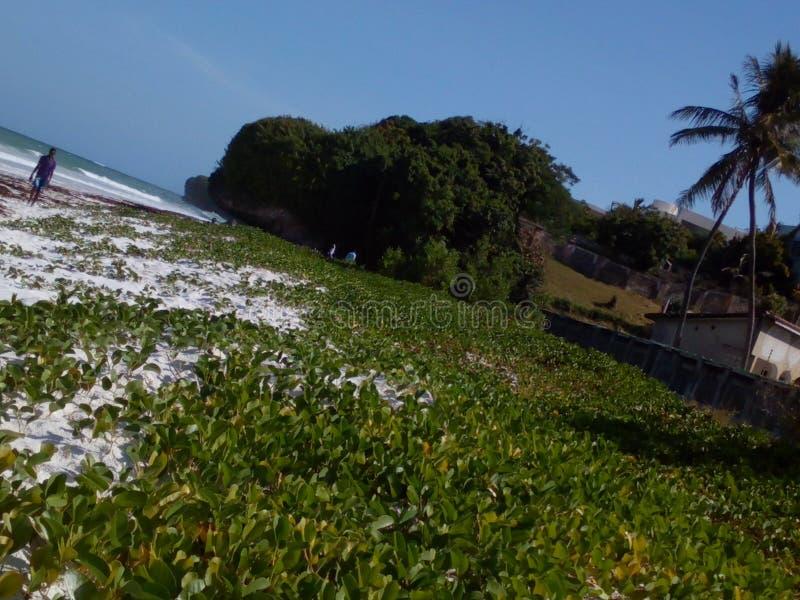 Παραλία Nyali, Μομπάσα Κένυα στοκ φωτογραφία με δικαίωμα ελεύθερης χρήσης