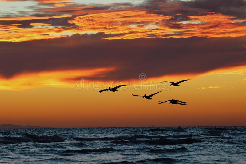 Παραλία sunsets στοκ εικόνες