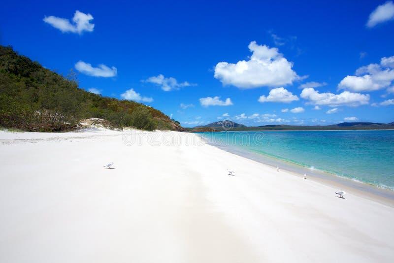 Παραλία Whitsundays Whitehaven στοκ φωτογραφίες με δικαίωμα ελεύθερης χρήσης