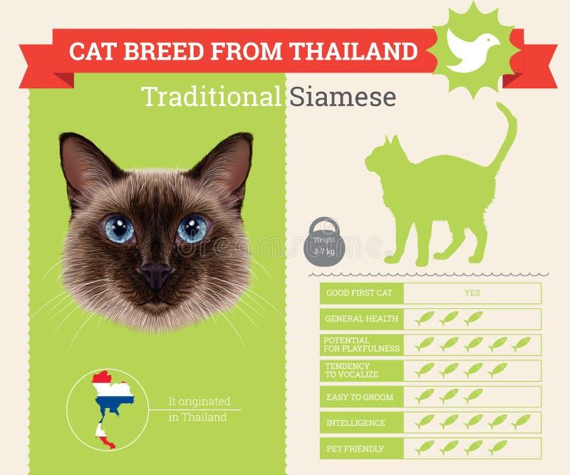 Παραδοσιακό σιαμέζο infographics φυλής γατών ελεύθερη απεικόνιση δικαιώματος