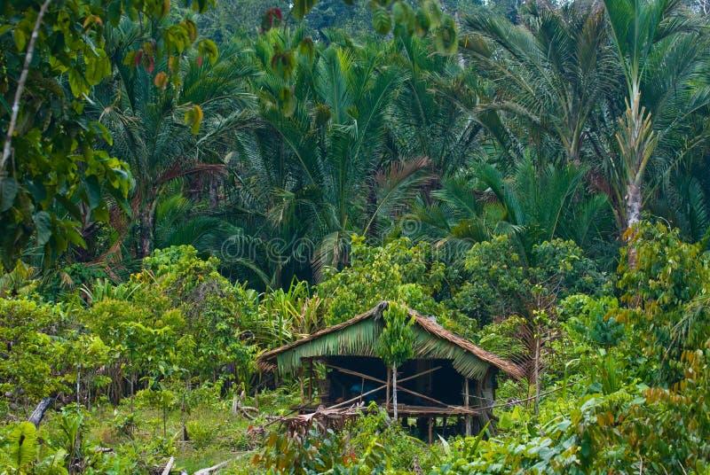 Παραδοσιακό σπίτι στη φυλή Mentawai ζουγκλών στοκ εικόνες