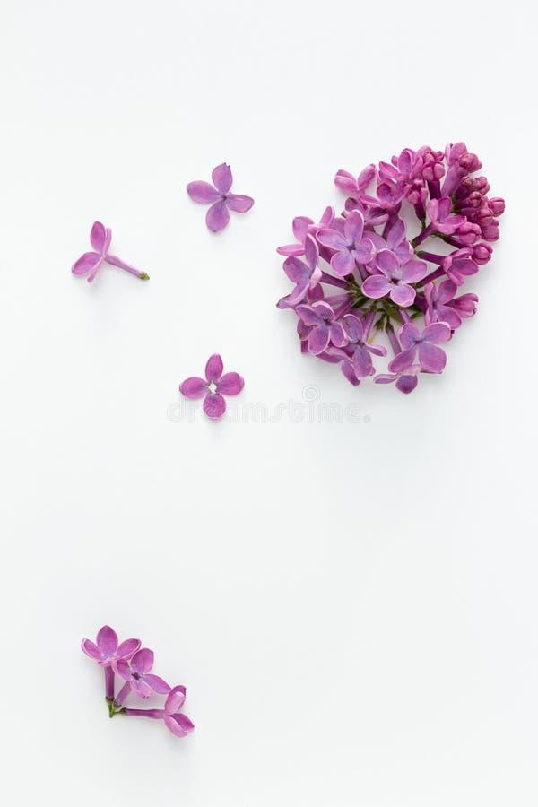 Πασχαλιά (Syringa vulgaris) στοκ εικόνα με δικαίωμα ελεύθερης χρήσης